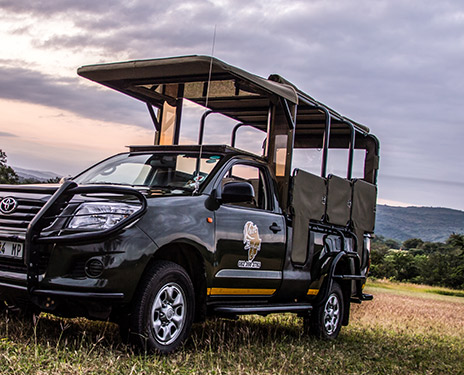 Kruger Safaris drives